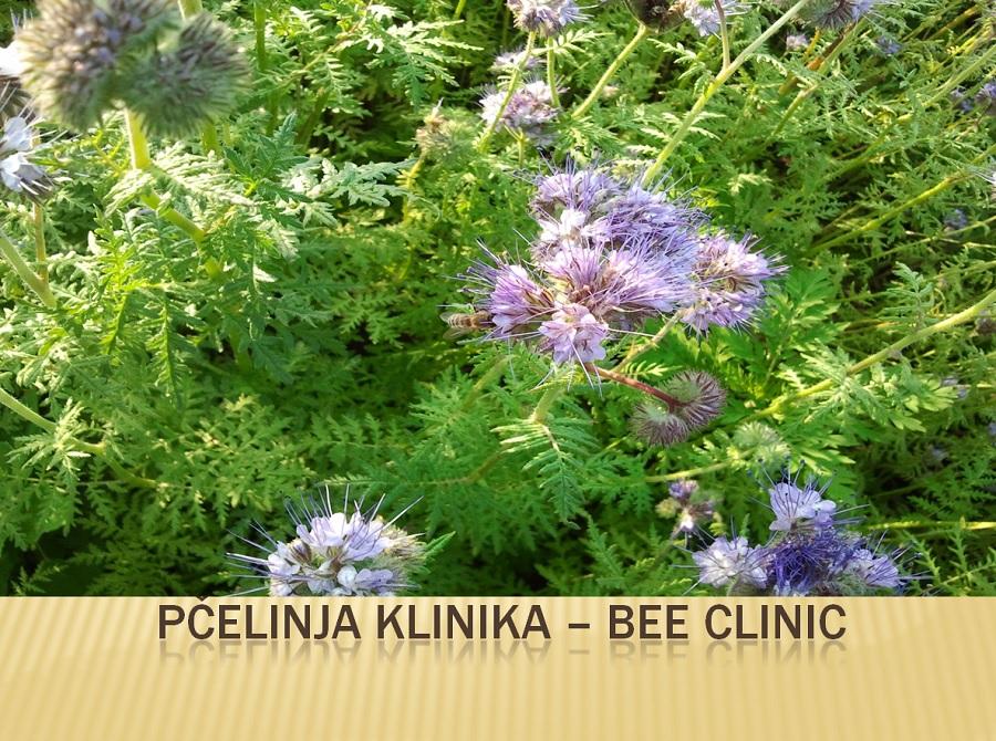Bagremov med Bio Pčelinja klinika